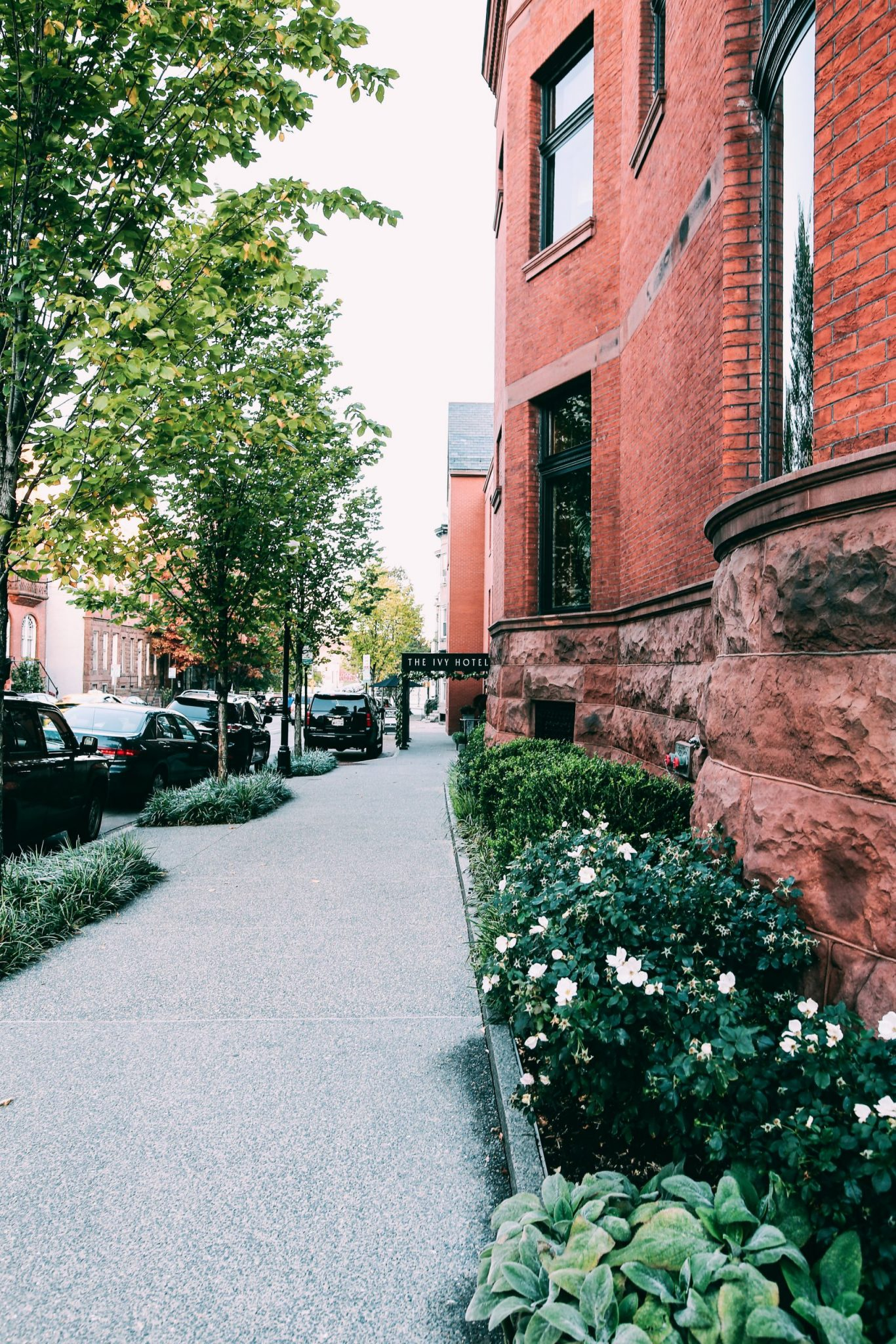 Street view of the ivy